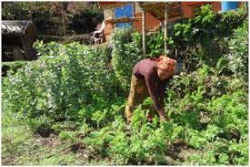 Vegetable farming Nepal
