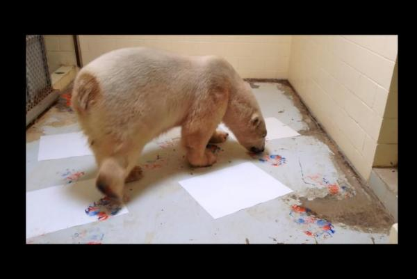 Polar-Picasso-paints-with-his-paws-at-bear-sanctuary