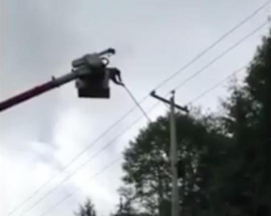 Hydro-workers-coax-baby-bear-down-from-electrical-pole