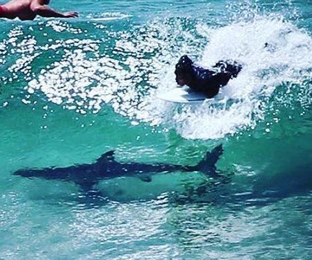surfer-passes-directly-over-shark-at-popular-australian-beach