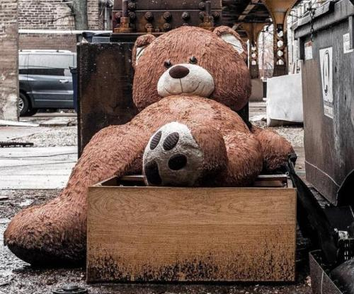 Owners-rescue-giant-teddy-bear-from-trash-heap-after-photos-go-viral