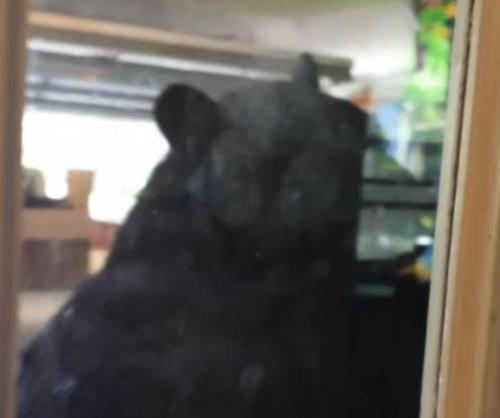 Florida-man-records-massive-black-bears-garage-visit